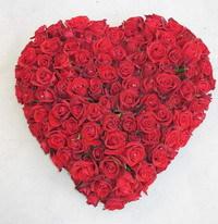 Сердце 101 роза!